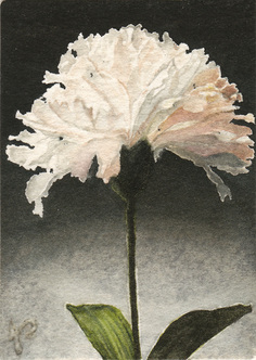 'White' Carnation' ACEO Watercolour Painting of Flower