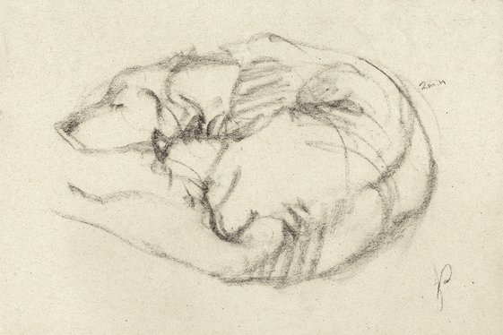 Gesture of Pet Dog in Charcoal Napping Animal by Jacqueline Gomez